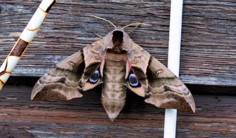 Mottephobia – frica de molii