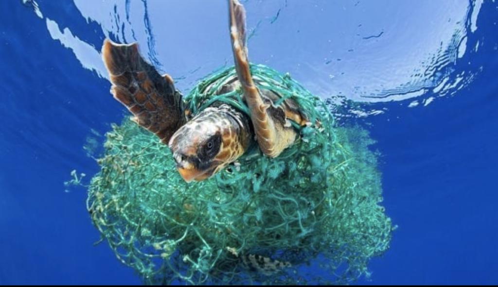 Poluarea cu plastic crește de la o zi la alta