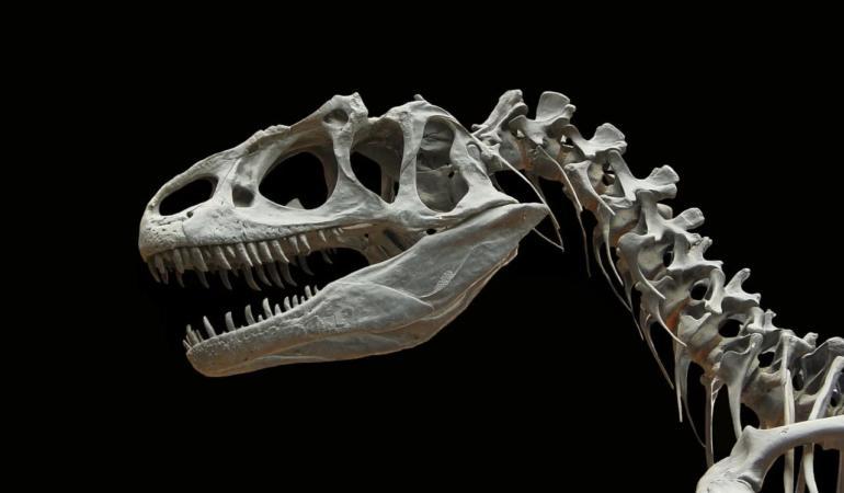 Dinozaurii sunt iar la modă. Oamenii licitează pentru ei