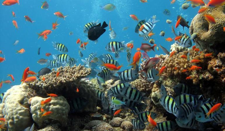 Peste 50% din Marea Barieră de Corali din Australia este în pericol