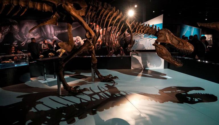 Cât costă un dinozaur? Află prețul unui T-Rex