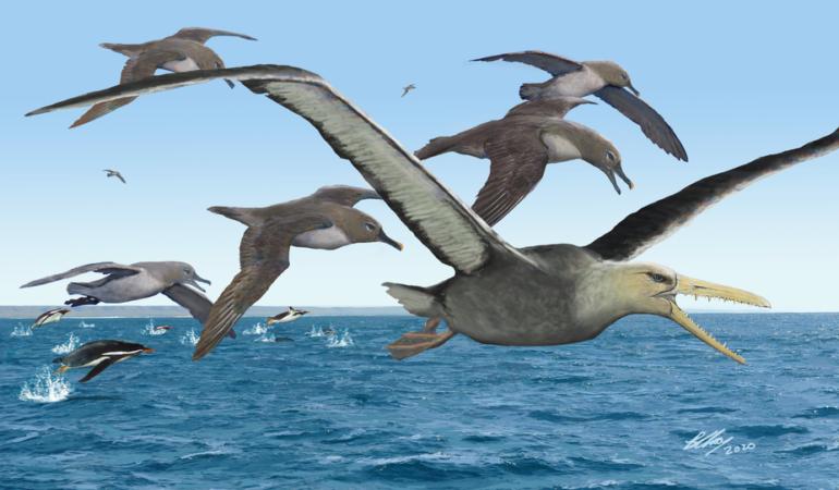 Acum 40 - 50 de milioane de ani existau păsări uriașe