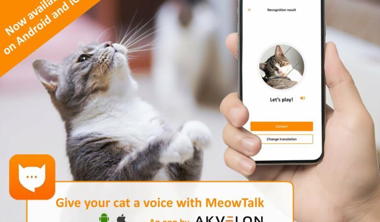 MeowTalk – Aplicația care traduce cuvintele pisicilor