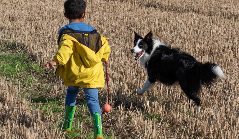 Câinii stimulează dezvoltarea psihică