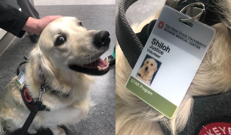 Câinii, angajați importanți ai spitalelor