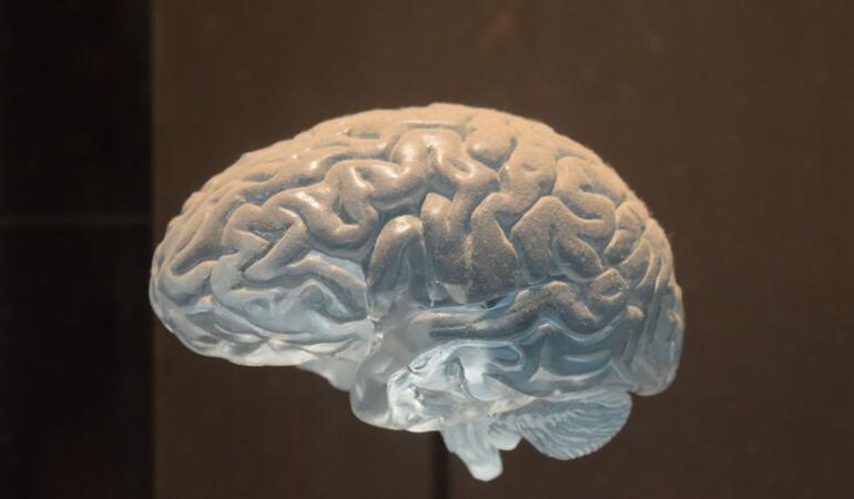 Animale fără creier – Care sunt acestea și cum pot supraviețui?