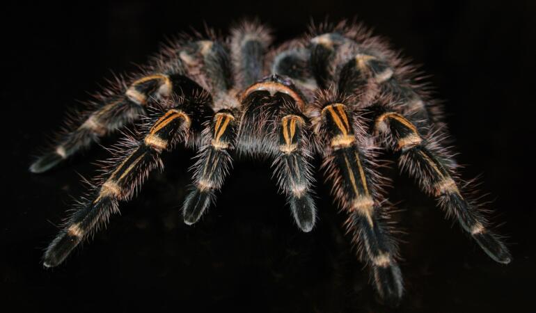 The Taranterra Project – expoziția de tarantule de la Muzeul Țării Crișurilor