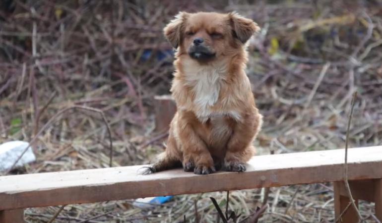 Animalele din Croația își așteaptă stăpânii printre dărâmături