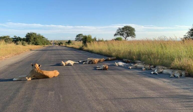 """Animale care trebuie să """"treacă strada"""" pentru a supraviețui"""