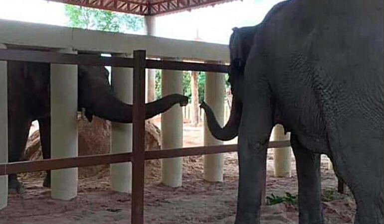 Cel mai singur elefant din lume are un prieten