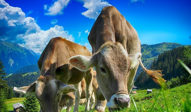 """""""Știința vacii"""" – tema principală a examenului național din India"""