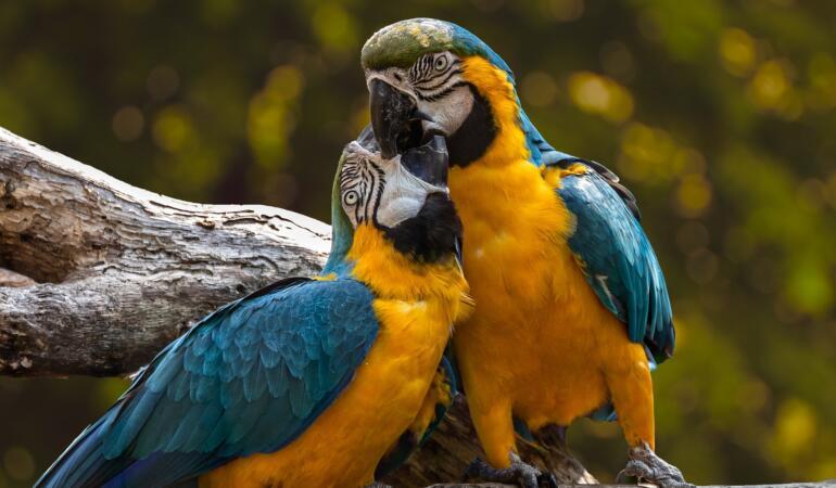 Piața mondială a faunei sălbatice. Cum ar fi să te ia cineva de lângă părinți și să te vândă?
