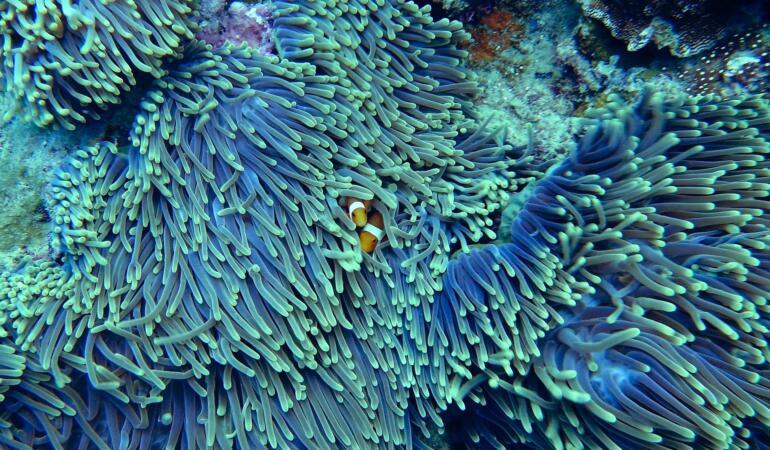 Recifele de corali sunt în pericol!