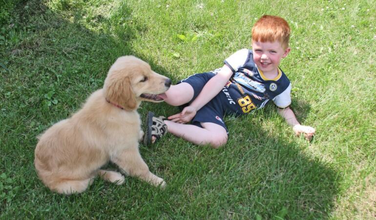 Cele mai potrivite rase de câini pentru familiile cu copii