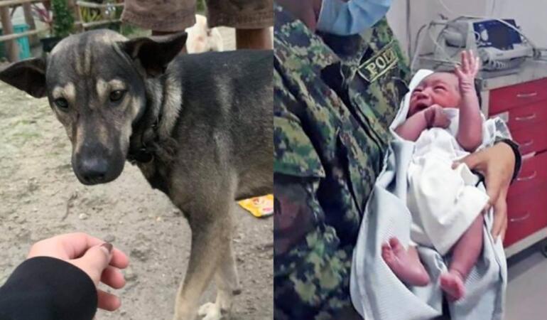 Un bebeluș abandonat a fost găsit de un câine