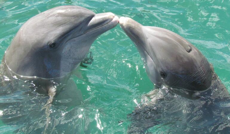 Delfinii au o personalitate similară cu a oamenilor