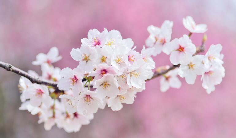 Astăzi are loc echinocțiu de primăvară. Ce înseamnă asta