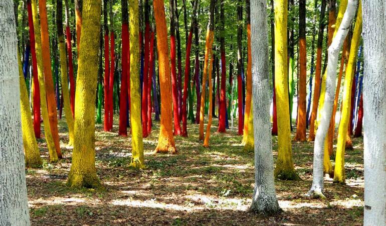 Locuri de poveste din România: Pădurea colorată de la Poienari