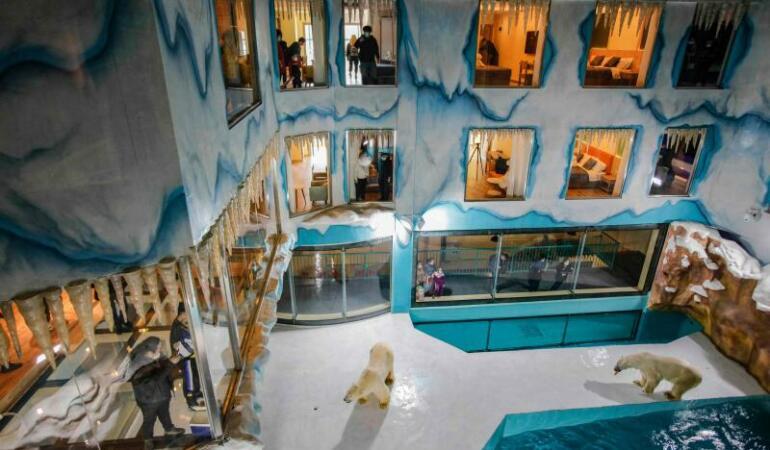S-a deschis un hotel în care poți dormi cu un urs polar. Cum ajungeți acolo