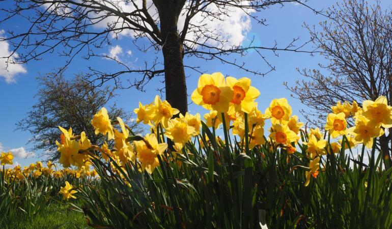 Locuri de poveste din România: Poienile cu flori de primăvară
