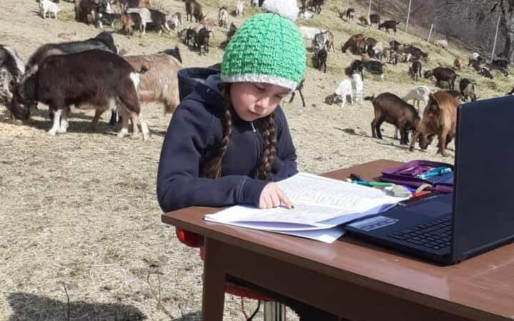 O fetiță de 10 ani face școală online printre capre și ieduți
