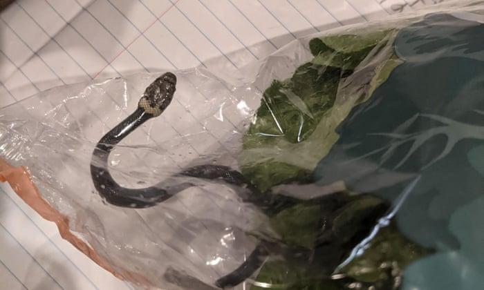 Un cuplu a cumpărat, fără să știe, un șarpe din supermarket