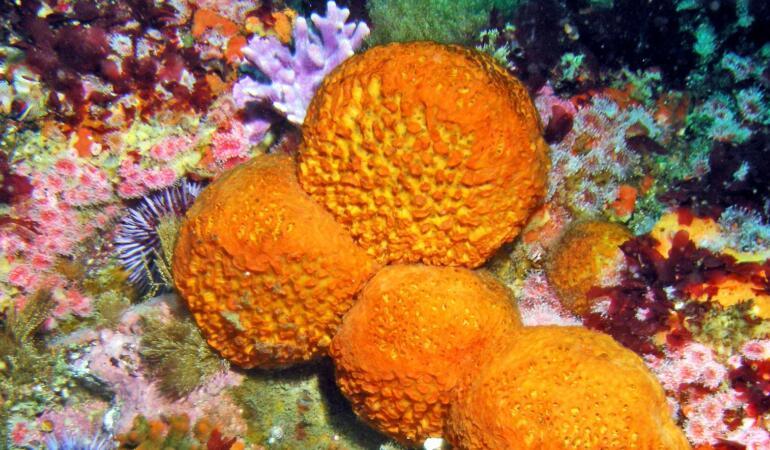 Cele mai neobișnuite animale care trăiesc pe Pământ. Buretele de mare, filtrul apelor mării