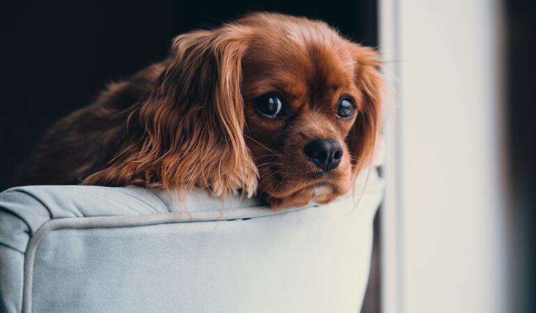 Rase de câini potrivite pentru cei care stau la bloc