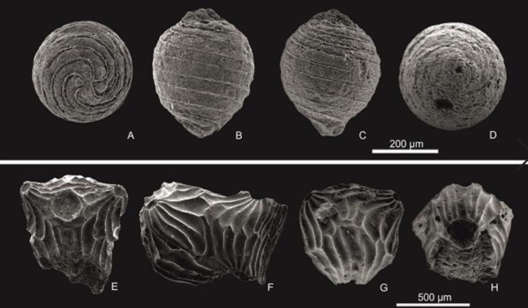 În Dobrogea a fost descoperită o specie necunoscută de plante acvatice