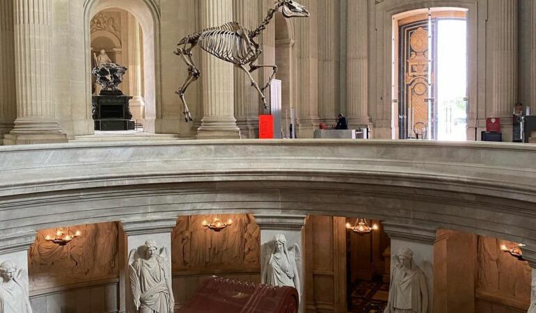 Un schelet al calului lui Napoleon naște controverse. Povestea lui Marengo, calul preferat al împăratului