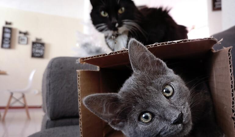 Pisicilor le place să stea în cutii. Iată de ce