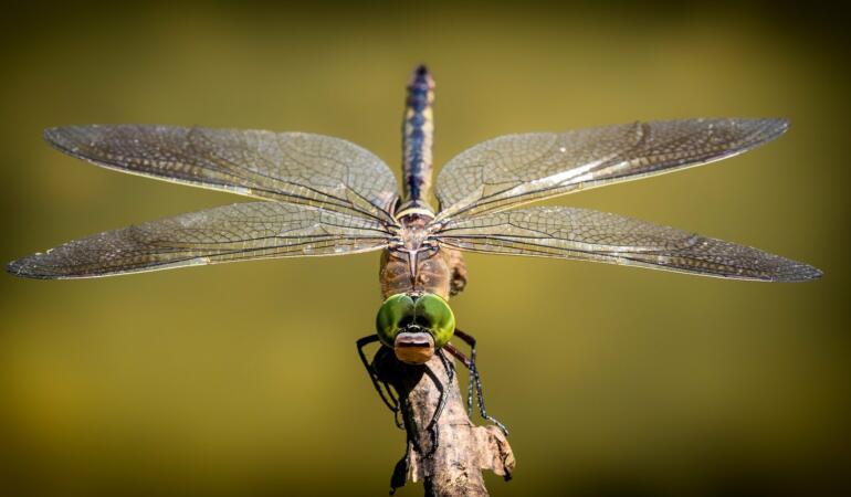 Insectele vor face parte din alimentația noastră. Deja se întâmplă la Iași