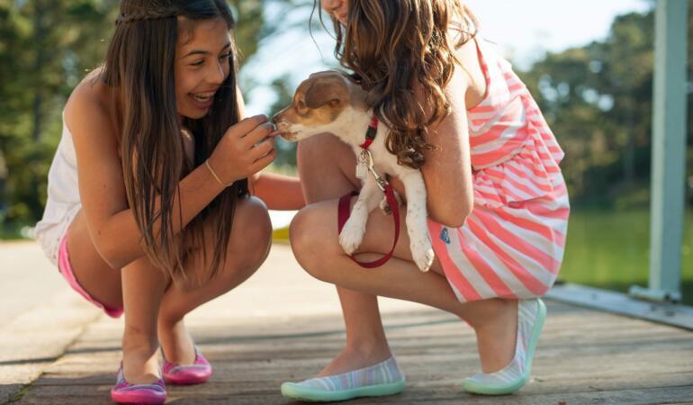 Respectul față de animale – noua materie din școlile spaniole