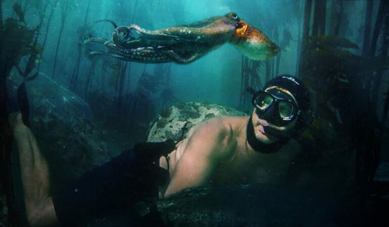 """Ziua Mondială a Oceanului Planetar. """"Profesoara mea, caracatița"""" ne învață cum să îl protejăm"""