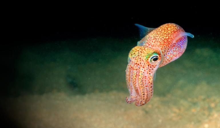 NASA a trimis calamari în spațiu. Experimentul care ne va ajuta să înțelegem călătoriile spațiale