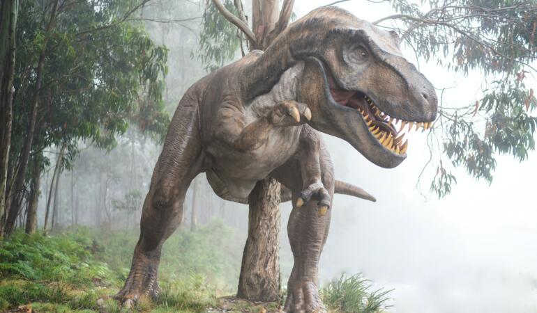 Știați? Dinozaurilor le plăcea frigul. Au trăit și la Cercul Polar