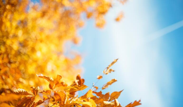 Meteorologii au anunțat cum va fi vremea în octombrie