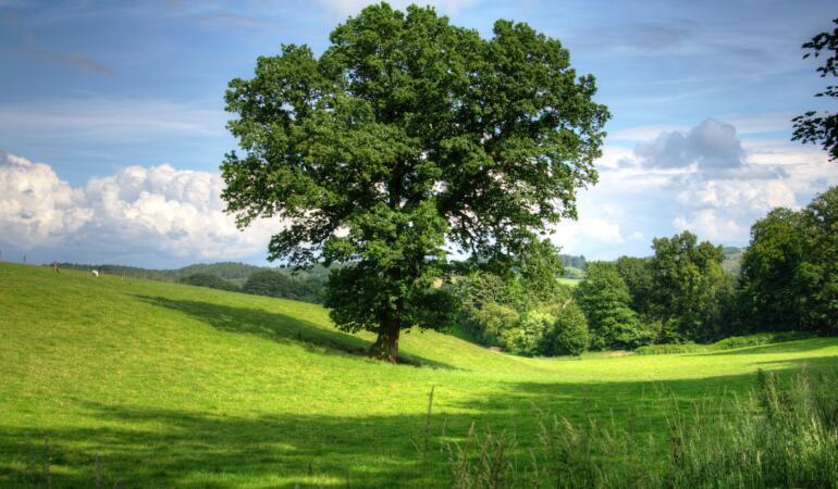 Copacii se adaptează schimbărilor climatice
