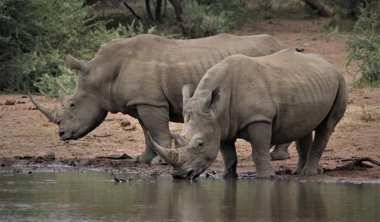 Cât de mari erau animalele preistorice. Descoperirile oamenilor de știință